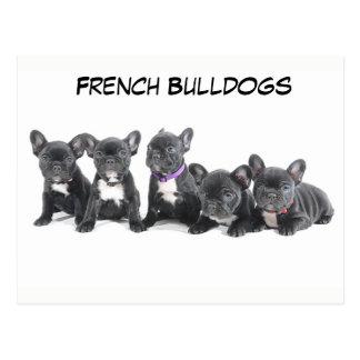 Niedliche französische Bulldoggen-Welpen Postkarte