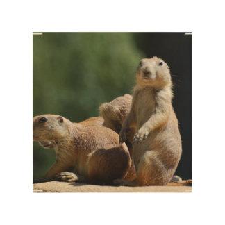Niedliche Grasland-Hunde Holzleinwände