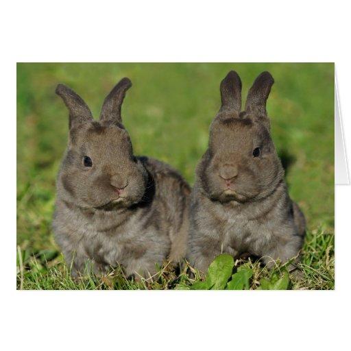 niedliche graue baby kaninchen s e baby tiere karten. Black Bedroom Furniture Sets. Home Design Ideas