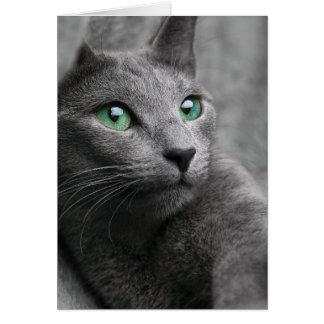 Niedliche graue Katze Karte
