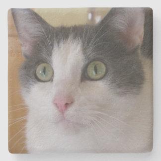 Niedliche graue und weiße Katze Steinuntersetzer