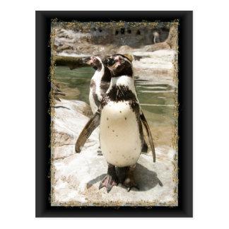 Niedliche Humboldtpenguin-Postkarten Postkarte