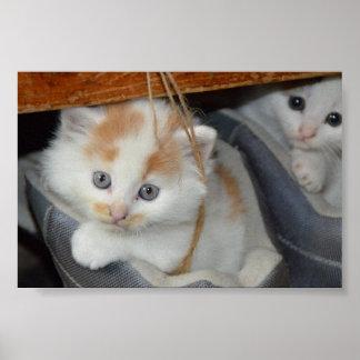 Niedliche Kätzchen in den Stiefeln Poster