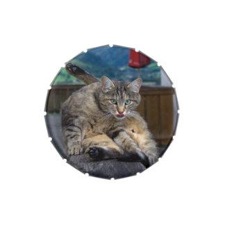 Niedliche Katze beim Pflegen unterbrochen Süßigkeitenbox