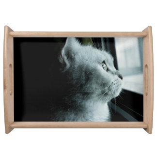 Niedliche Katze, die durch das Fenster schaut Serviertablett