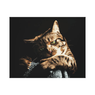 Niedliche Katze, die Leinwand spielt