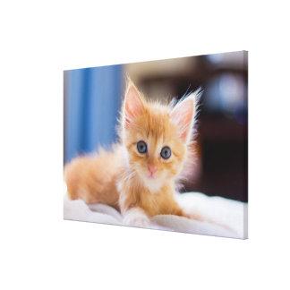 Niedliche Katze mit blauen Augen Leinwanddruck
