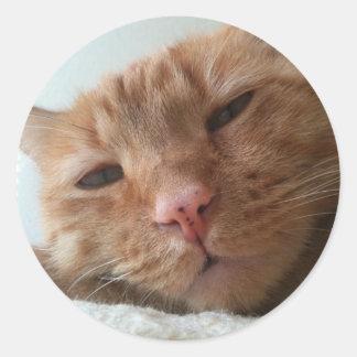 niedliche Katze Runder Aufkleber