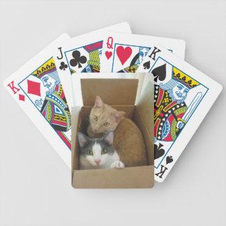 Niedliche Katzen in einem Kasten Bicycle Spielkarten