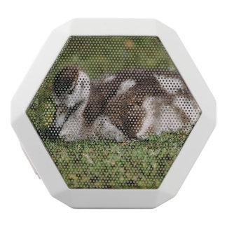 Niedliche kleine Baby-Gans, Gosling im Gras Weiße Bluetooth Lautsprecher