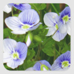 Niedliche, kleine blaue Blumen Quadratsticker