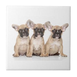 Niedliche kleine französische Bulldoggen Keramikfliese