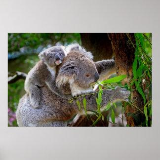 Niedliche Koala Plakate