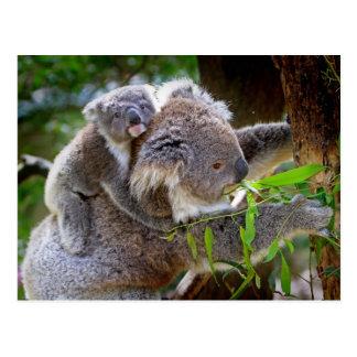 Niedliche Koala Postkarte