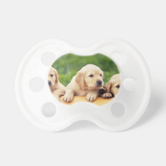 Niedliche Labrador-Retriever Schnuller