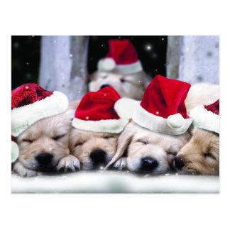 Niedliche Labrador-Welpen mit Weihnachtshüten Postkarte