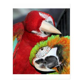 Niedliche Macaws Postkarte