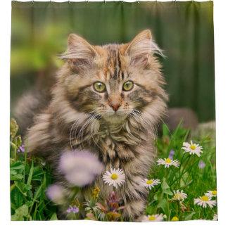 Niedliche Maine-Waschbär-Kätzchen-Katze in einer Duschvorhang