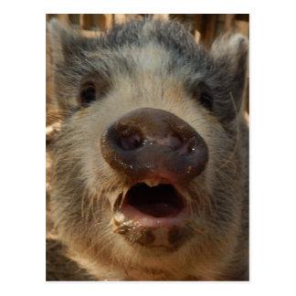 Niedliche Minischwein-Postkarte Postkarten