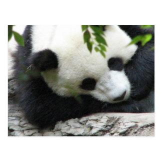 Niedliche Panda-Postkarte Postkarte