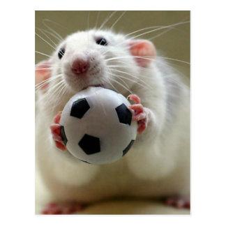 Niedliche Ratte, die Fußball spielt Postkarten