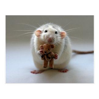 Niedliche Ratte, die Teddy hält Postkarte