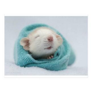 Niedliche Ratte Postkarte