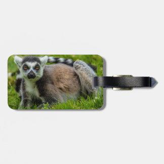 Niedliche Ring-Schwanz Lemur-Entwurfsprodukte Gepäckanhänger
