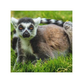 Niedliche Ring-Schwanz Lemur-Entwurfsprodukte Leinwanddruck