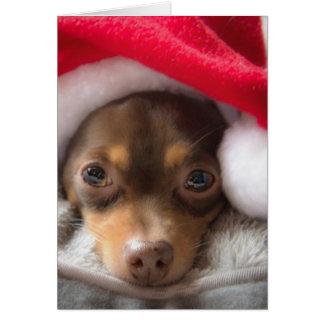 Niedliche SanktChihuahua Feliz Navidad Karte