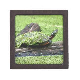 Niedliche Schildkröte bedeckt in Grünem, Spaß Schmuckkiste