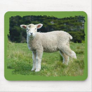 Niedliche schlammige Lamm-Baby-Schafe in der Wiese Mousepad