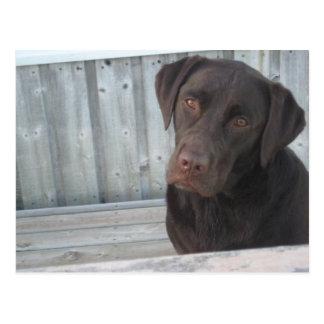 Niedliche Schokoladen-Labrador-Postkarte Postkarte