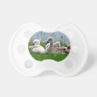 Niedliche Schwan-Babys im Gras - Schnuller