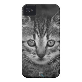Niedliche Schwarzweiss-Katze, iPhone 4 Fall iPhone 4 Hüllen