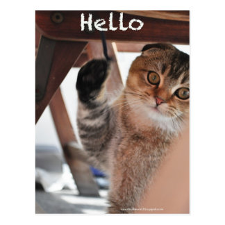 Niedliche Scottishfalten-Nudelkatze sagen hallo Postkarte