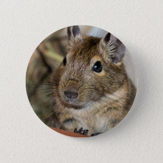 Niedliche wachsame Degu Fotografie Runder Button 5,1 Cm