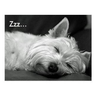 Niedliche Westie (Westhochland-Terrier) Hundepostk Postkarte