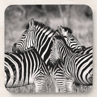 Niedliche Zebra-Herden-Natur-Safari-wild lebende Untersetzer