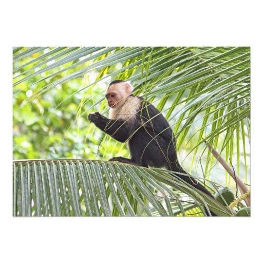 Niedlicher Affe auf einer Palme Personalisierte Einladung