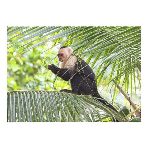 Niedlicher Affe auf einer Palme Einladungen