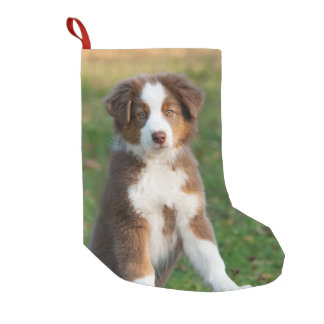 Niedlicher australischer Schäfer-Hundewelpe - Kleiner Weihnachtsstrumpf
