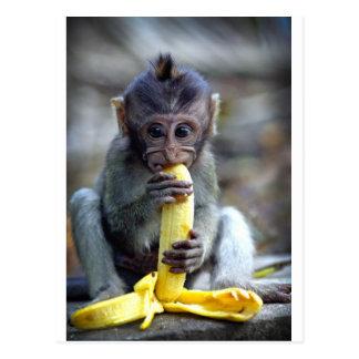 Niedlicher Baby Macaqueaffe, der Banane isst Postkarte