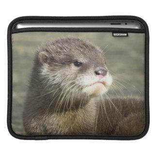Niedlicher Baby-Otter Sleeve Für iPads