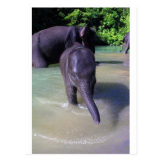 Niedlicher Babyelefant im Fluss Postkarte