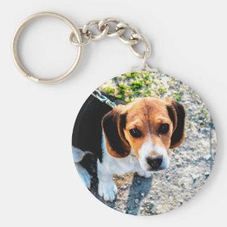 Niedlicher Beagle Schlüsselanhänger