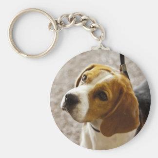 Niedlicher Beagle wartete Leckereien! Schlüsselanhänger