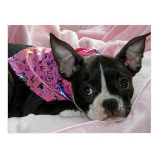 Niedlicher Boston-Terrier-Welpe Postkarte