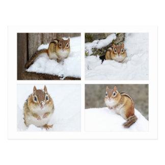 Niedlicher Chipmunk, der in der Foto-Collage des Postkarte