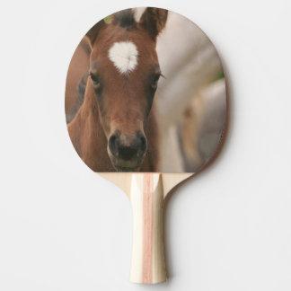 Niedlicher Colt Tischtennis Schläger